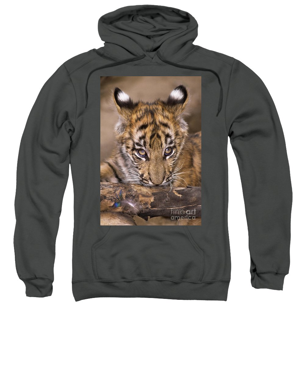 Bengal Tiger Sweatshirt featuring the photograph Bengal Tiger Cub And Peacock Feather Endangered Species Wildlife Rescue by Dave Welling