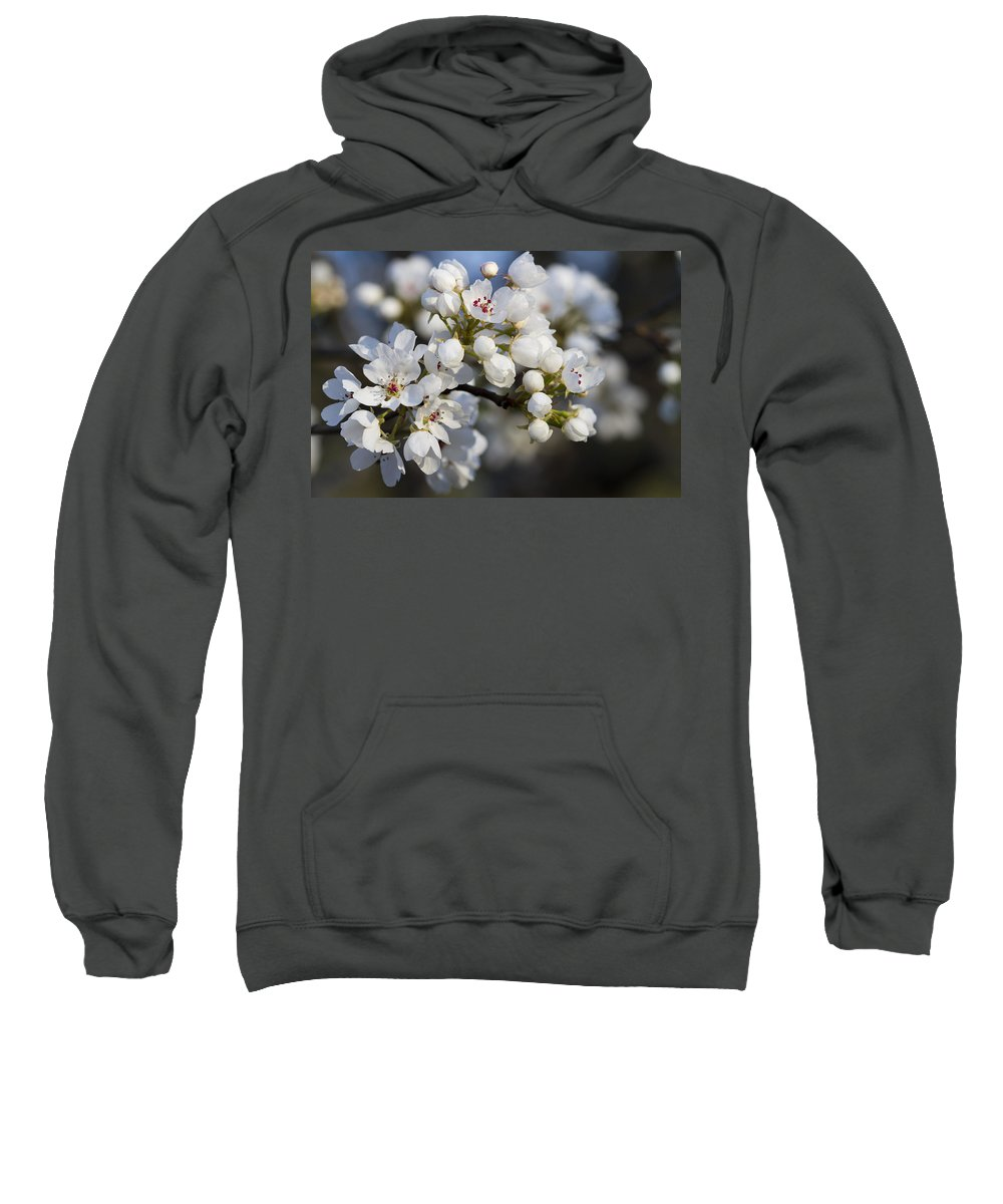 White Sweatshirt featuring the photograph Billows Of Fluffy White Bradford Pear Blossoms by Kathy Clark