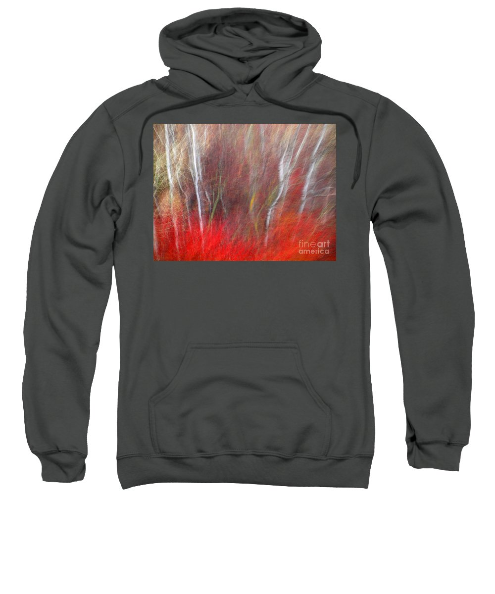 Blur Sweatshirt featuring the photograph Birch Trees Abstract by Tara Turner