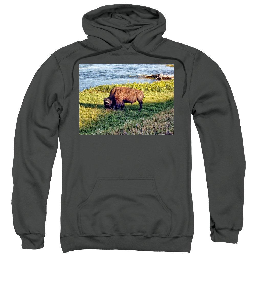 Bison Sweatshirt featuring the photograph Bison 4 by Dawn Eshelman