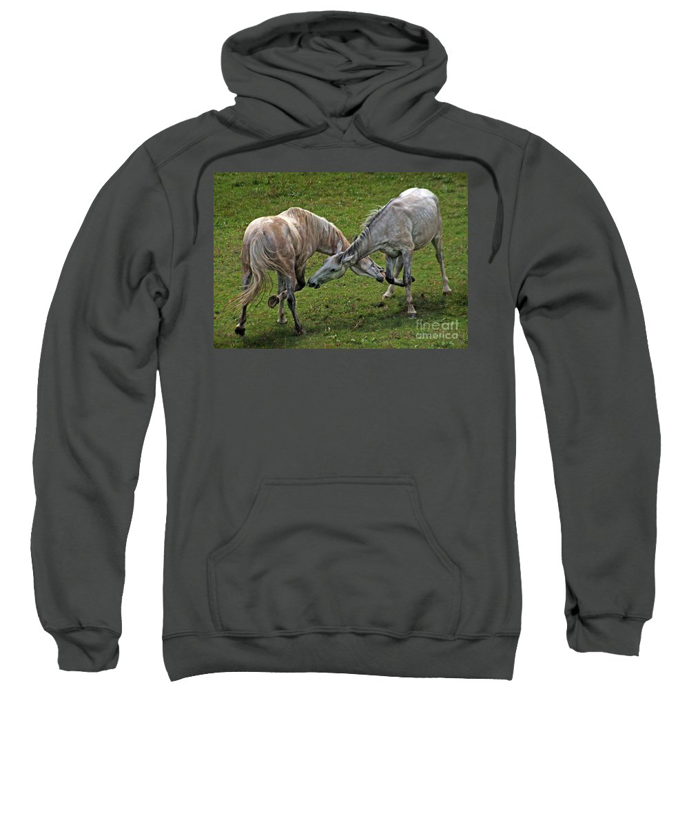 Horse Sweatshirt featuring the photograph Bite For A Bite by Angel Ciesniarska