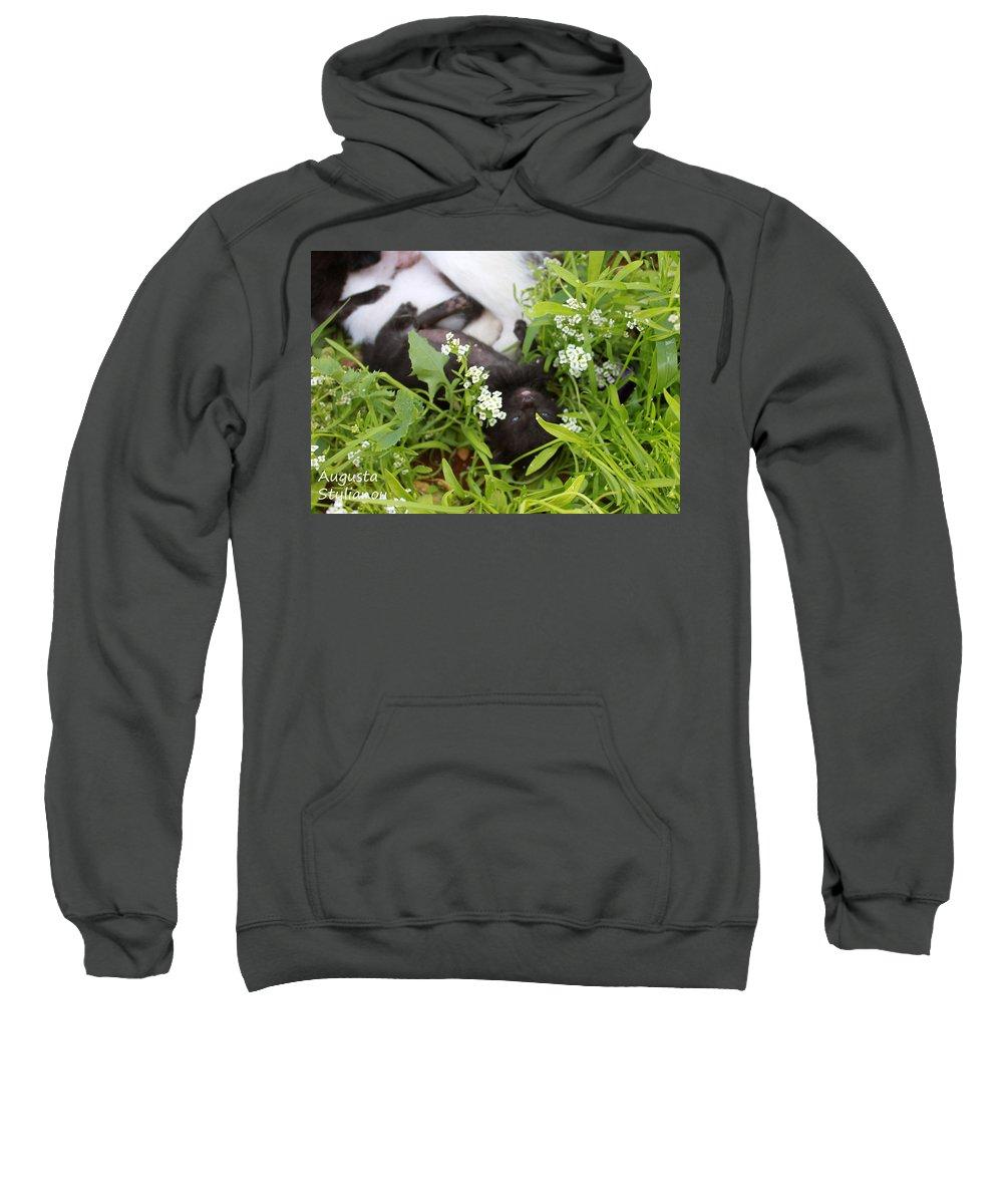 Cat Sweatshirt featuring the photograph Black Kitten by Augusta Stylianou