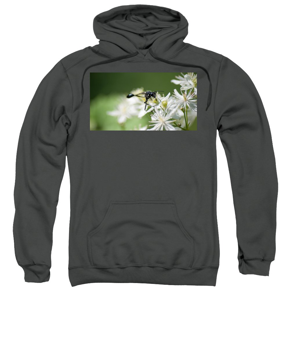 Optical Playground By Mp Ray Sweatshirt featuring the photograph Black Mud Dauber by Optical Playground By MP Ray