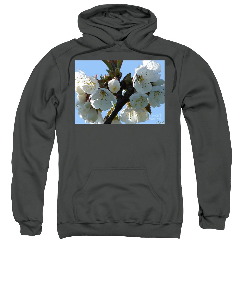 Blossoms Sweatshirt featuring the photograph Blossoms 3 by Carol Lynch