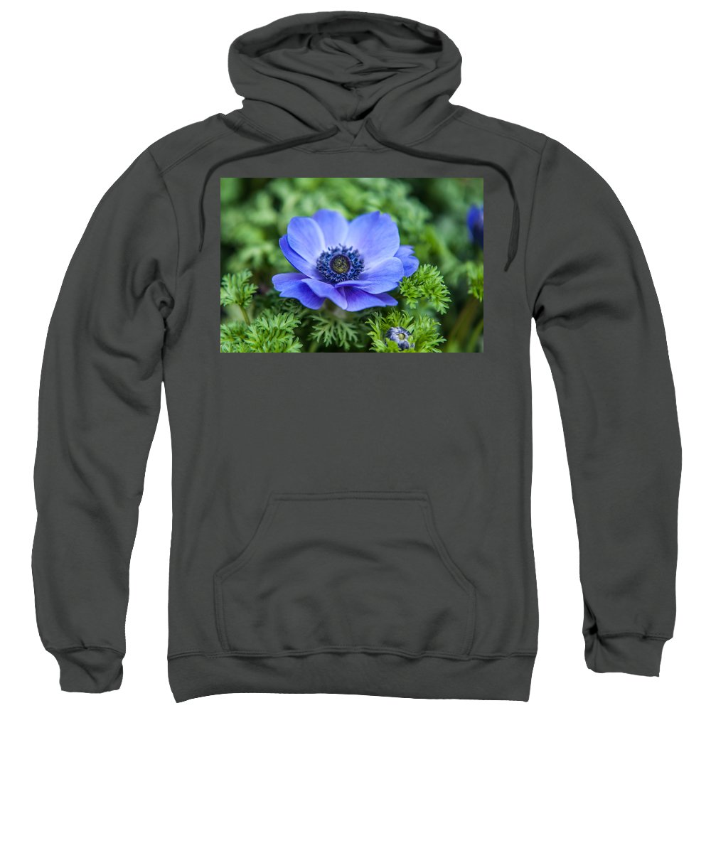Flower Sweatshirt featuring the photograph Blue Anemone. Flowers Of Holland by Jenny Rainbow