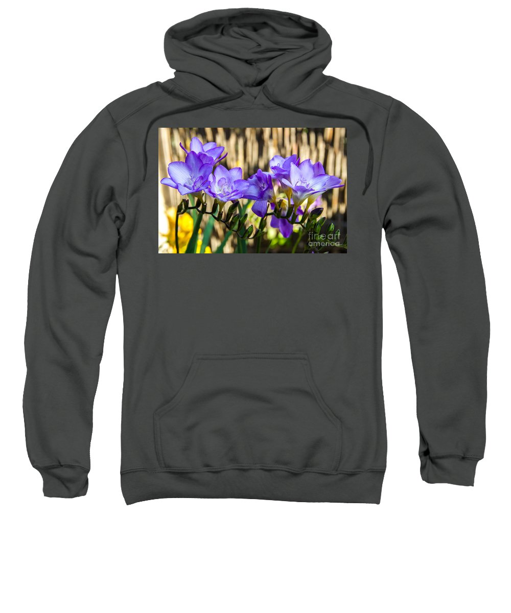 Blue Bells Sweatshirt featuring the photograph Blue Bell Flowers, Corona Del Mar California by Tirza Roring