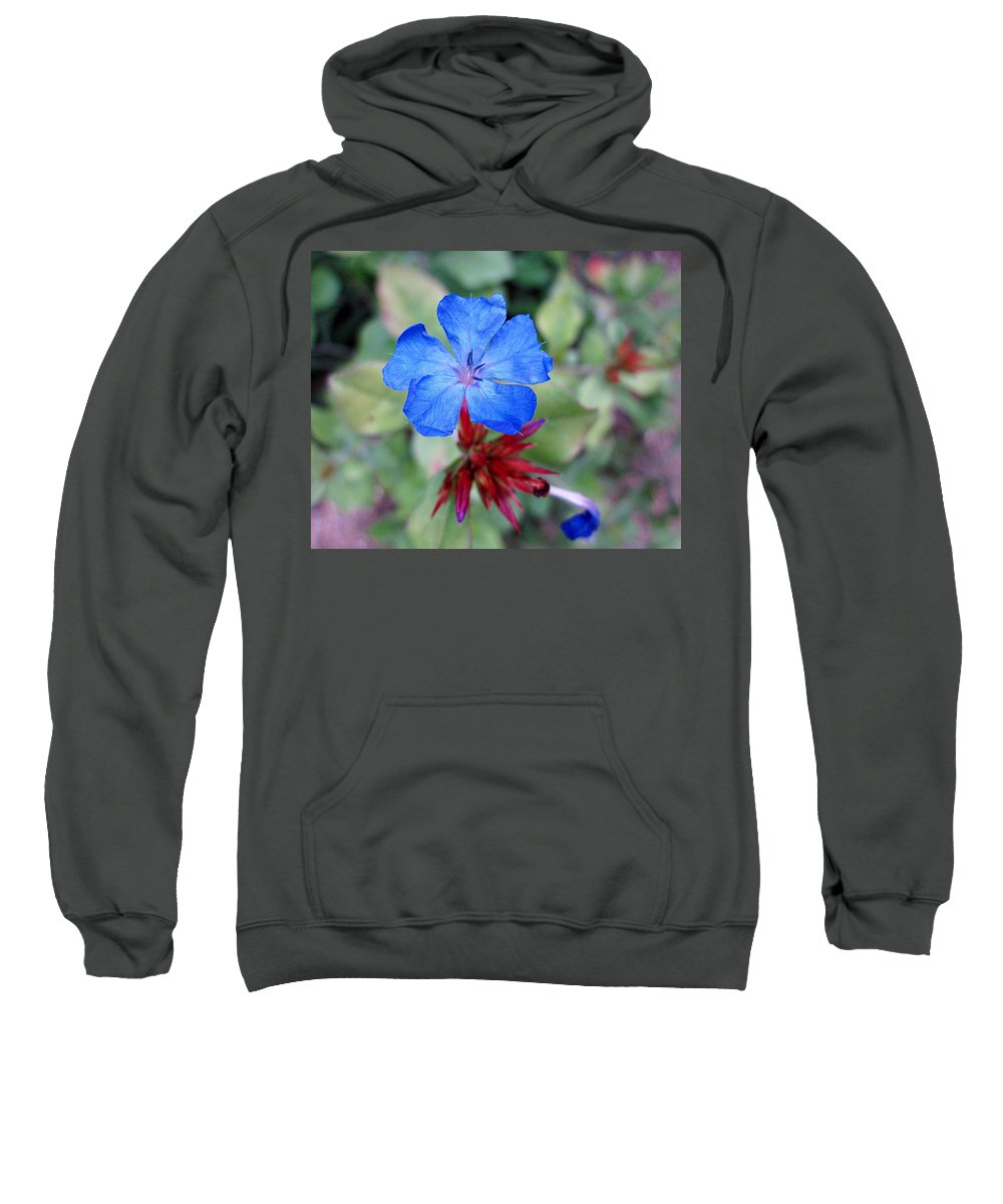 Plumbago Sweatshirt featuring the photograph Blue Bloom by MTBobbins Photography