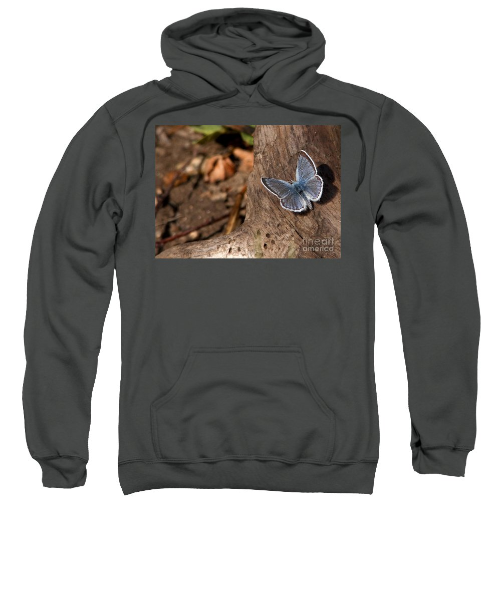 Blue Sweatshirt featuring the photograph Blue Butterfly by Russell Smith