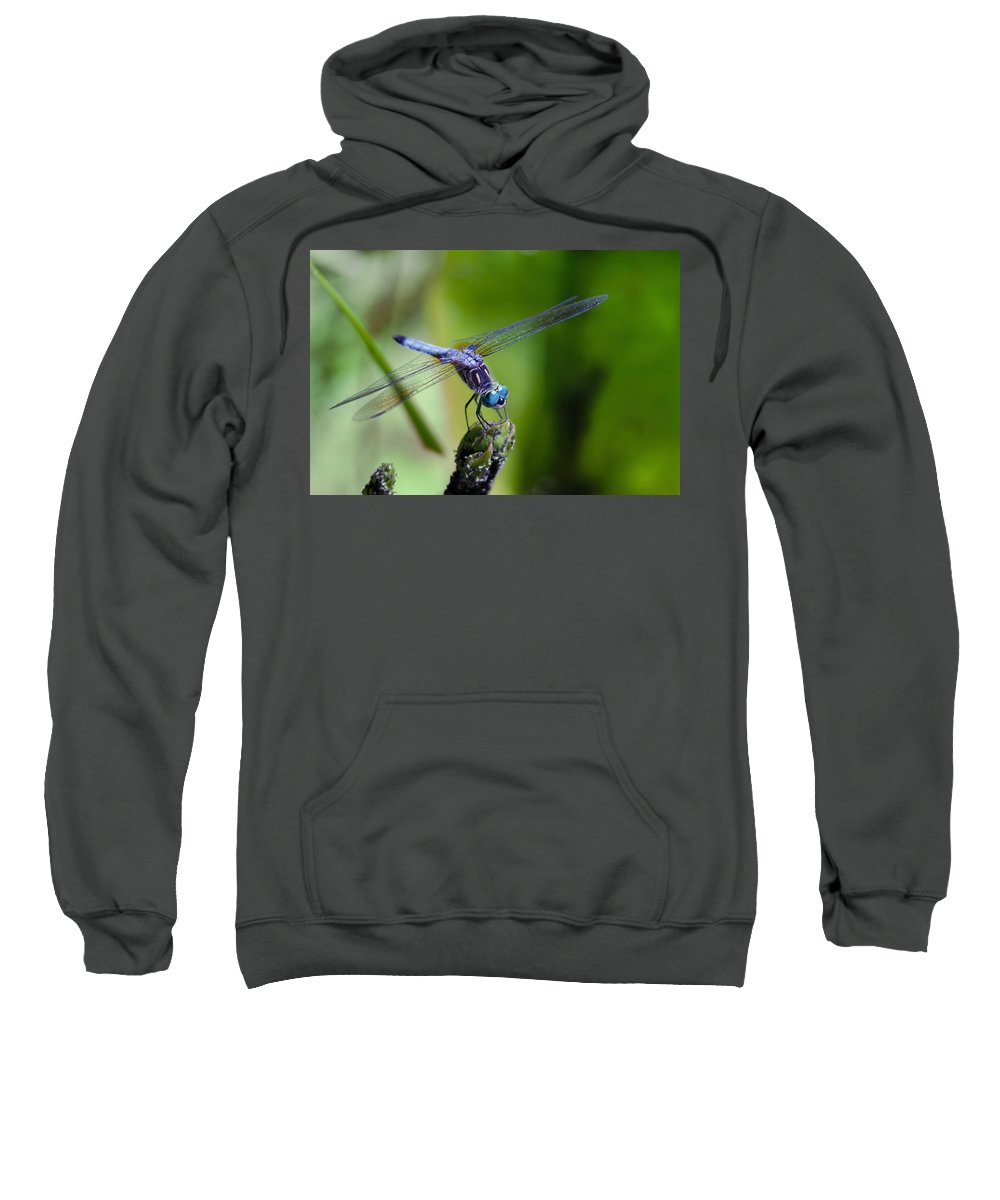 Animals Sweatshirt featuring the photograph Blue Dragonfly by Jim Shackett