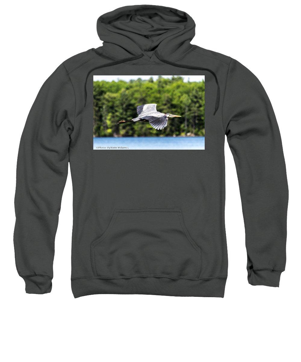 Great Blue Heron Sweatshirt featuring the photograph Blue Heron In Flight II by Nate Wilson