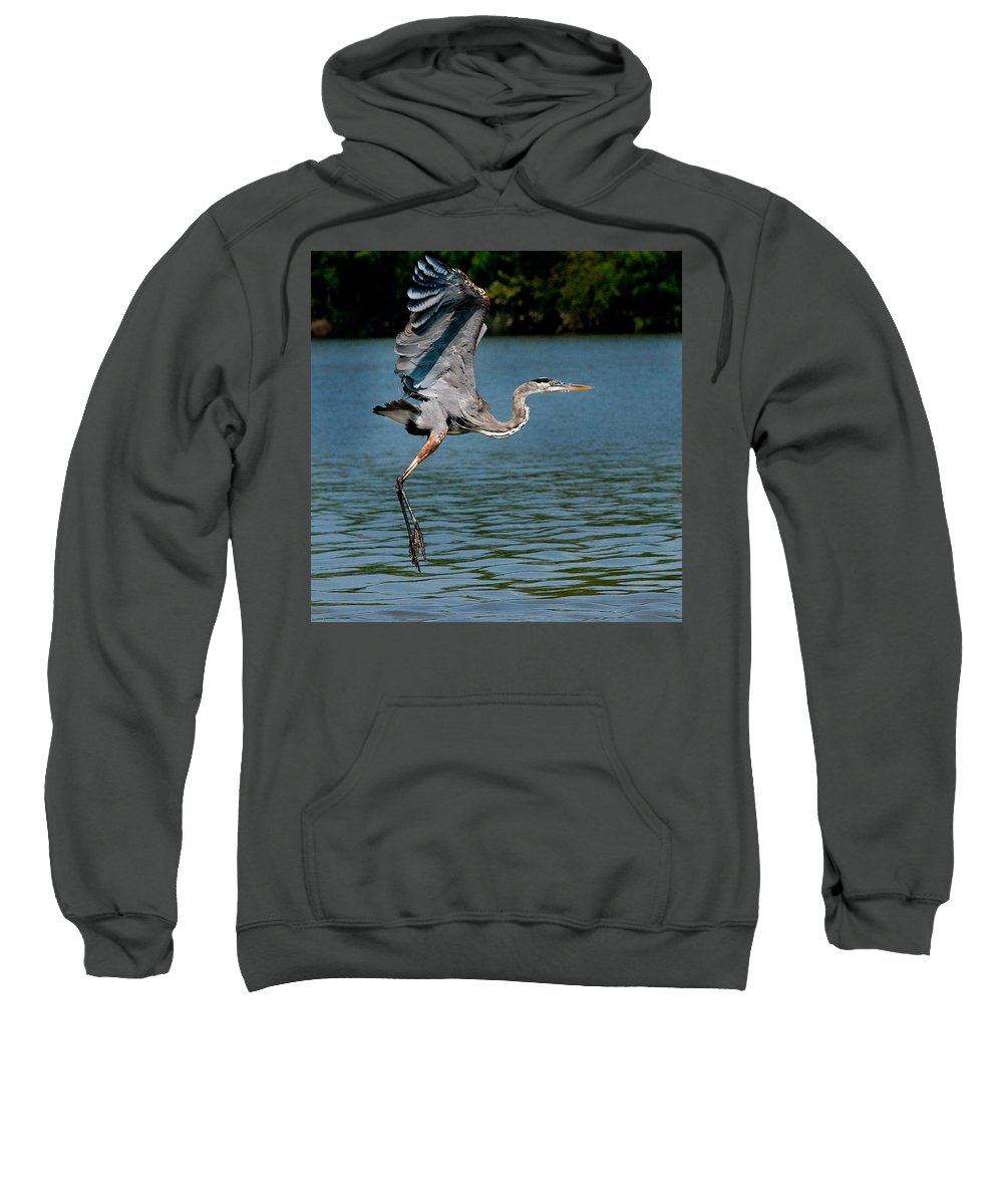 Blue Heron Sweatshirt featuring the photograph Blue In Flight by Mitford Fontaine