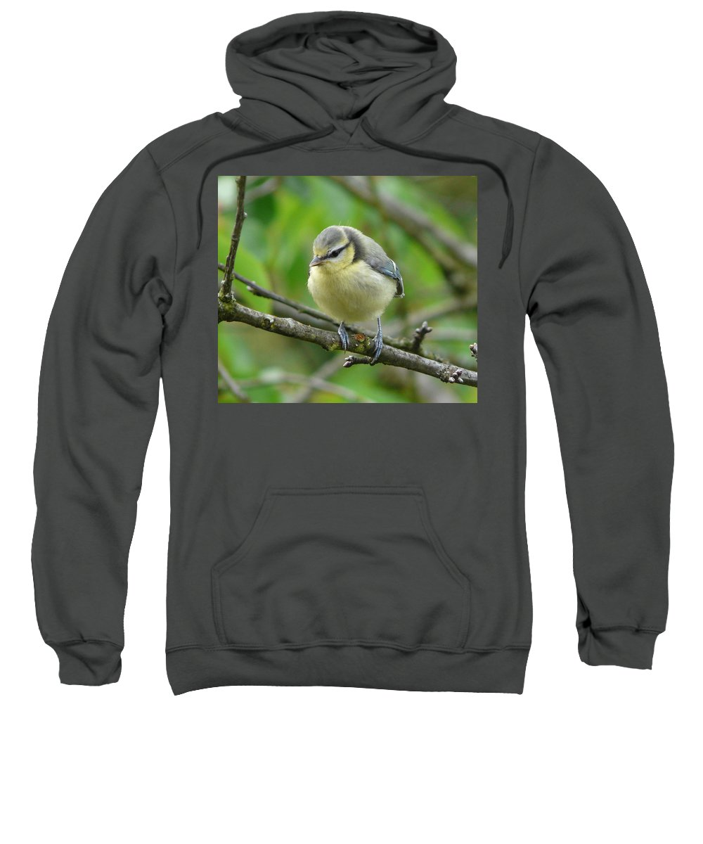 Bird Sweatshirt featuring the photograph Blue Tit In A Cherry Tree by Valerie Ornstein