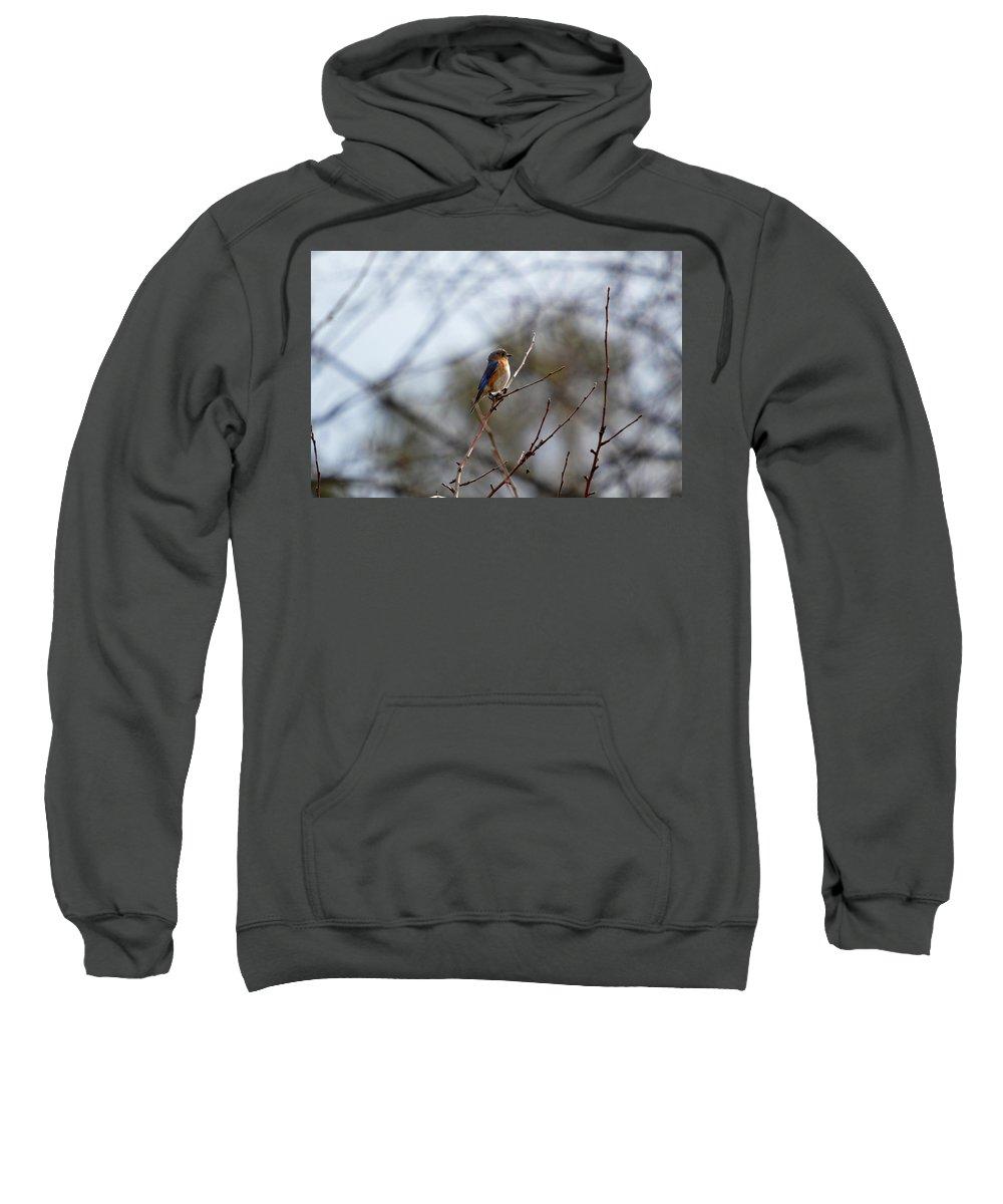Bluebird Sweatshirt featuring the photograph Bluebird In The Sun by Thomas Phillips