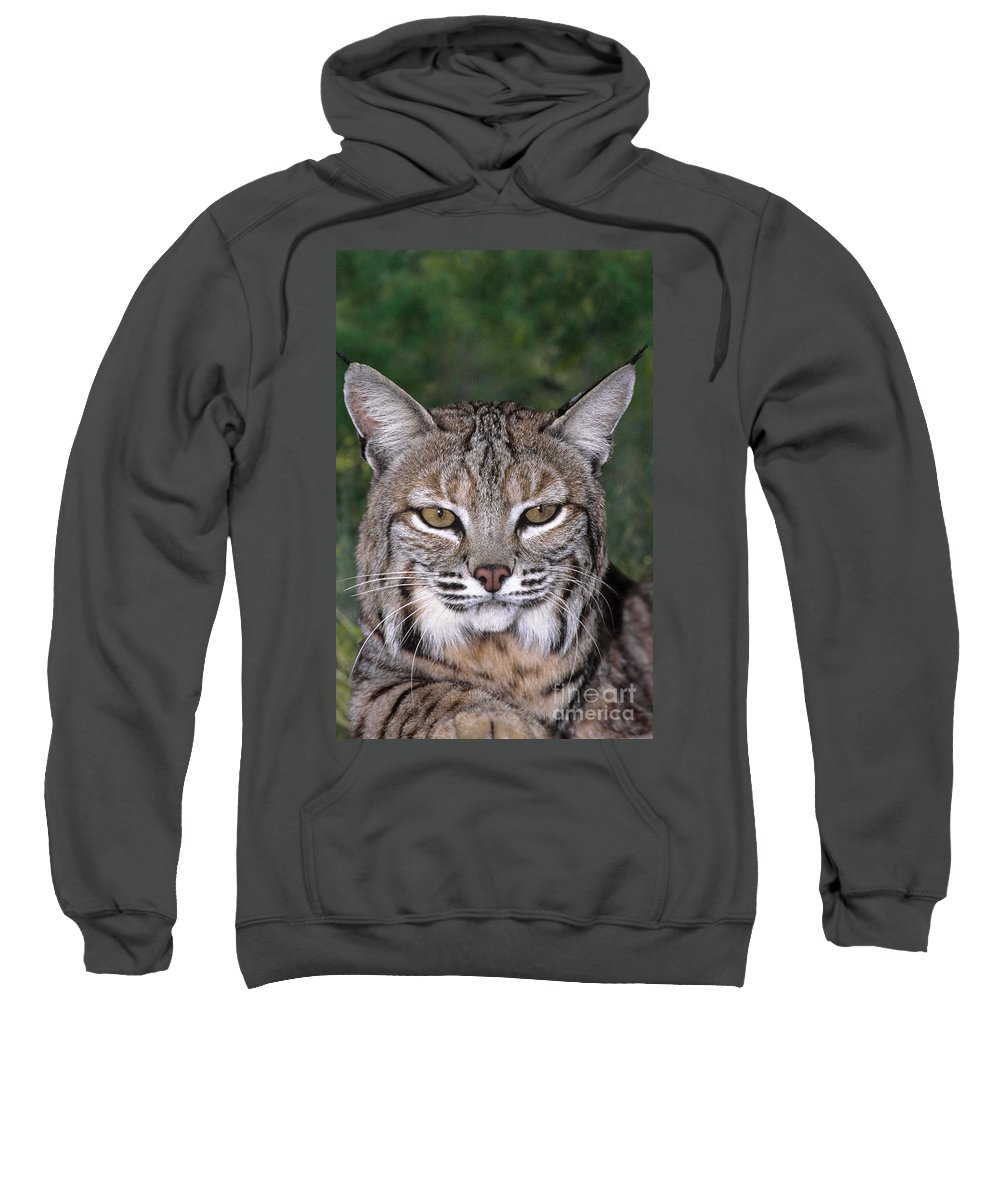 Bobcat Sweatshirt featuring the photograph Bobcat Portrait Wildlife Rescue by Dave Welling