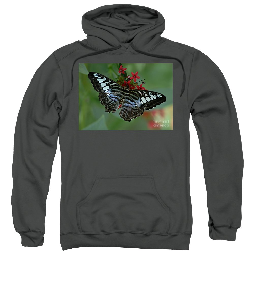 Butterfly Sweatshirt featuring the photograph Bold And Beautiful by Bob Christopher