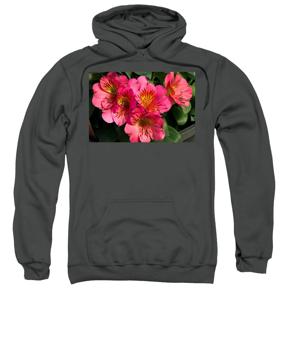 Agriculture Sweatshirt featuring the photograph Bouquet Of Pink Lily Flowers by John Trax