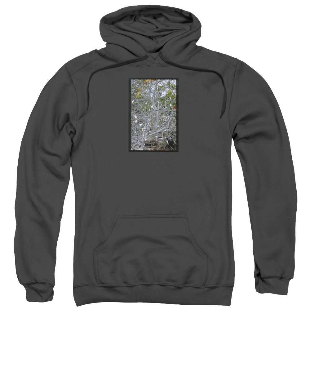 Tree Sweatshirt featuring the photograph Branches 1 by Robert Nickologianis