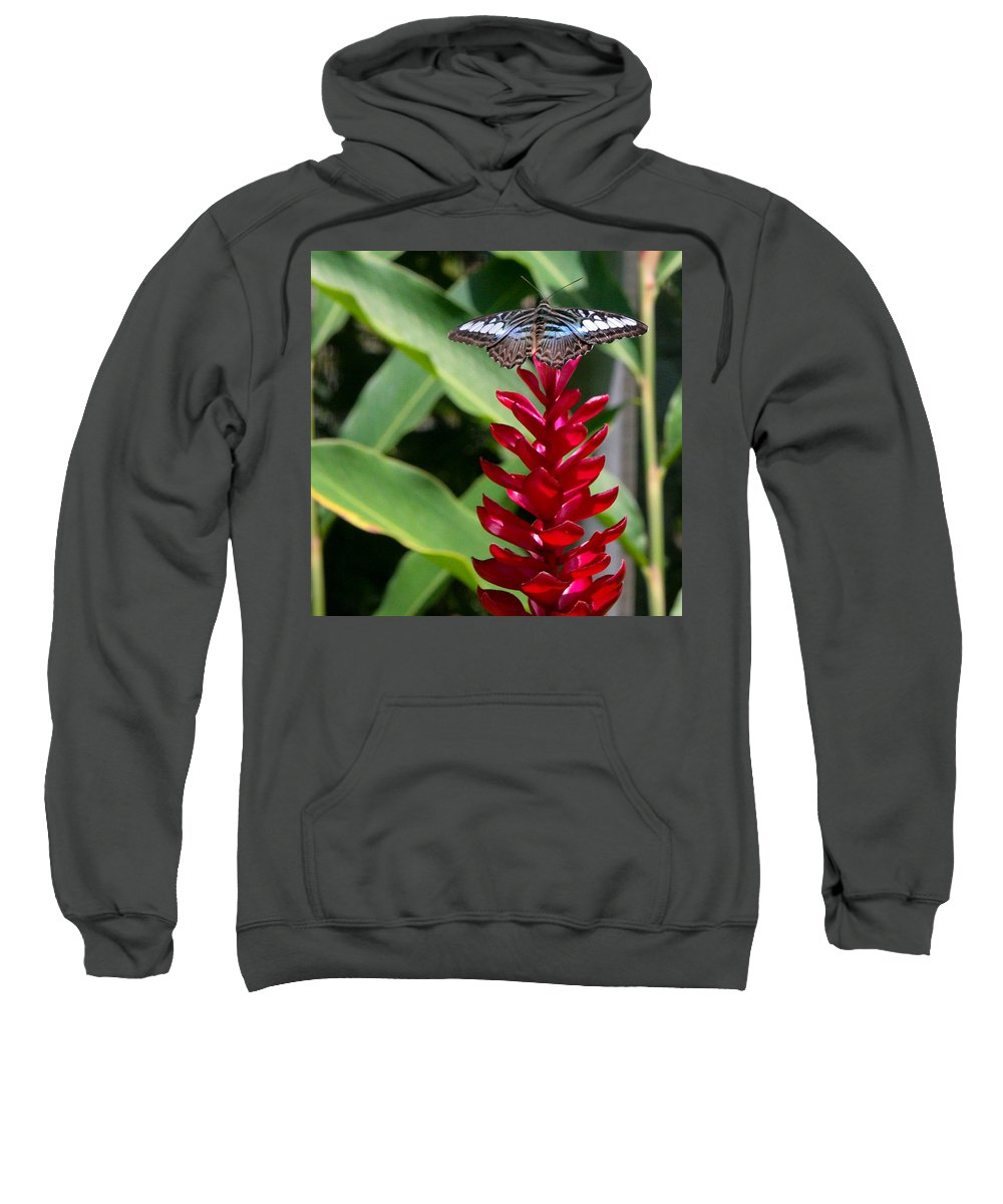 Butterfly Sweatshirt featuring the photograph Brilliant Butterfly by Natalie Rotman Cote