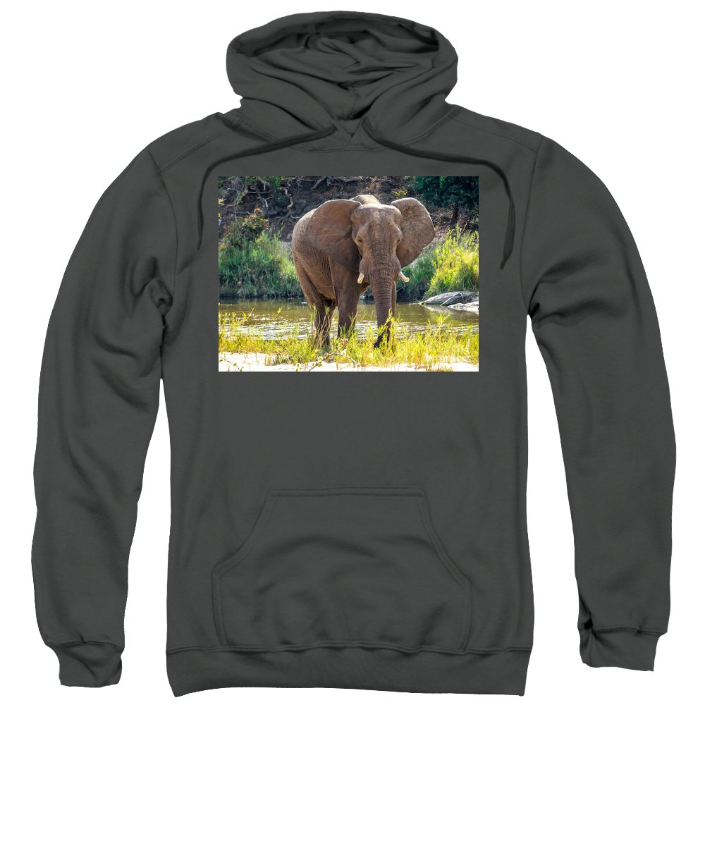 South Africa Sweatshirt featuring the photograph Brilliant Elephant by DAC Photography