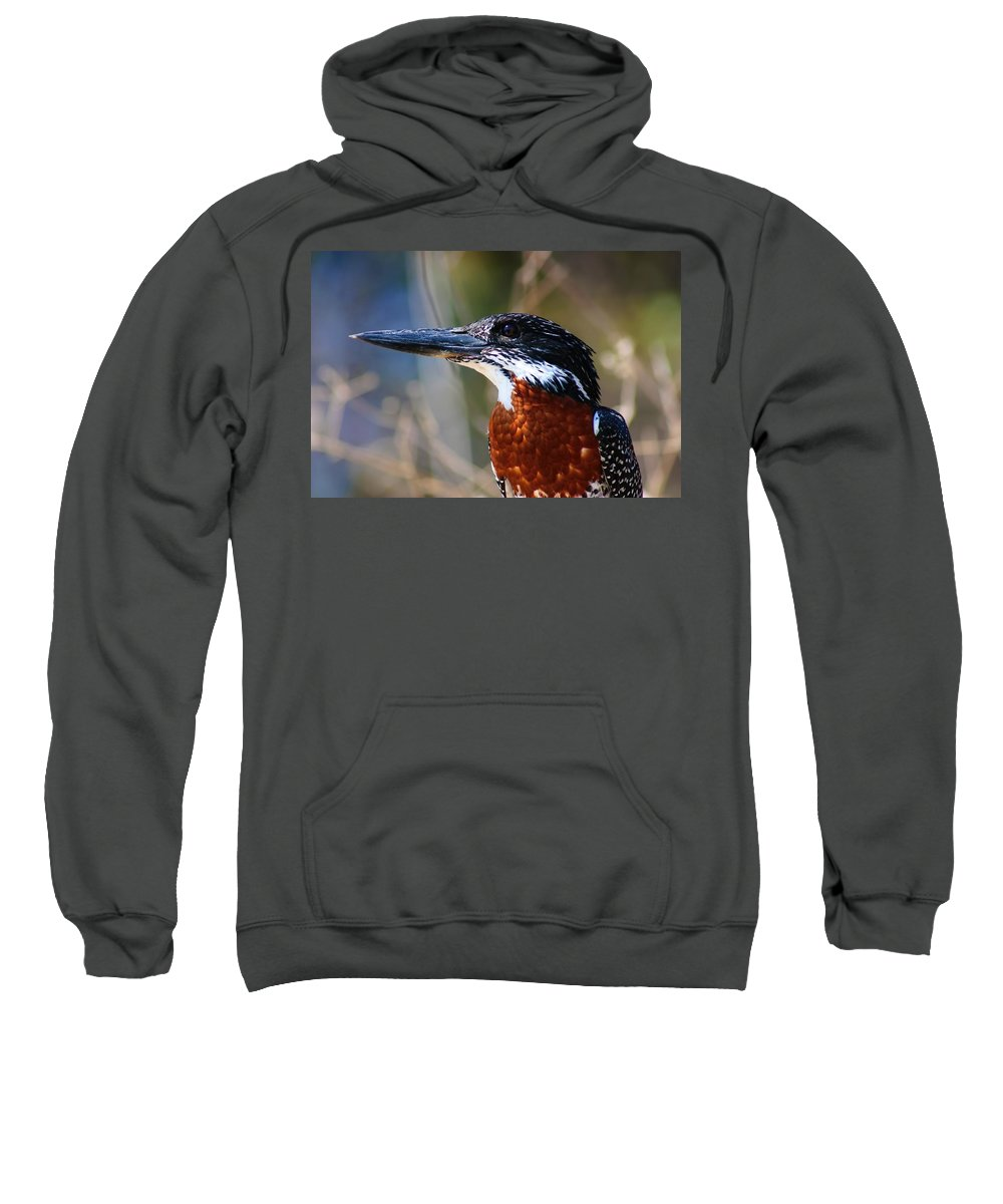 Brown Crested Kingfisher Sweatshirt featuring the photograph Brown Crested Kingfisher by Amanda Stadther