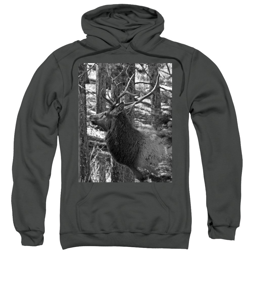 Animals Sweatshirt featuring the photograph Bull Elk Bw by Ernie Echols