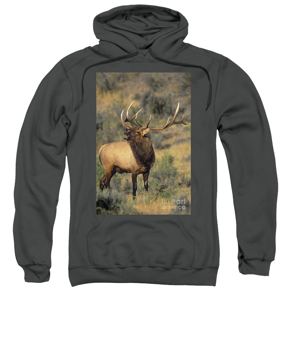 North America Sweatshirt featuring the photograph Bull Elk In Rut Bugling Yellowstone Wyoming Wildlife by Dave Welling