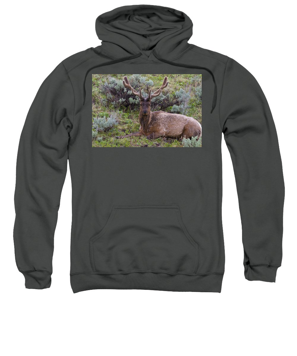 America Sweatshirt featuring the photograph Bull Elk by Jack R Perry