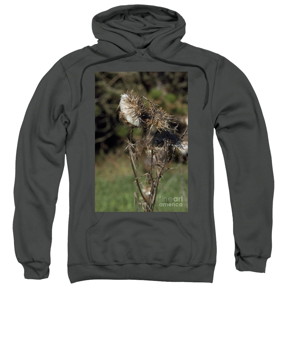 Seeds Sweatshirt featuring the photograph Burr by Joseph Yarbrough