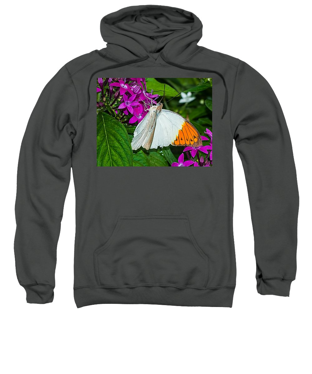 White Sweatshirt featuring the photograph Butterfly 63 by Photos By Cassandra