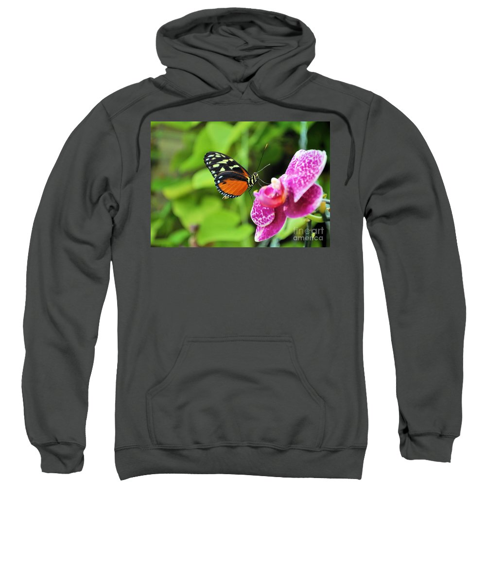 Butterfly Sweatshirt featuring the photograph Butterfly by Matthew Naiden