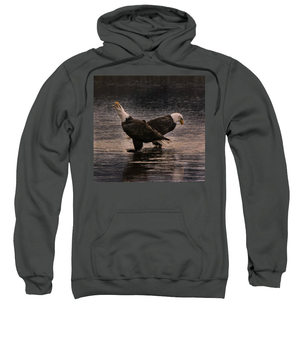 Eagles Sweatshirt featuring the photograph Call Of The Wild by Scott Wickward
