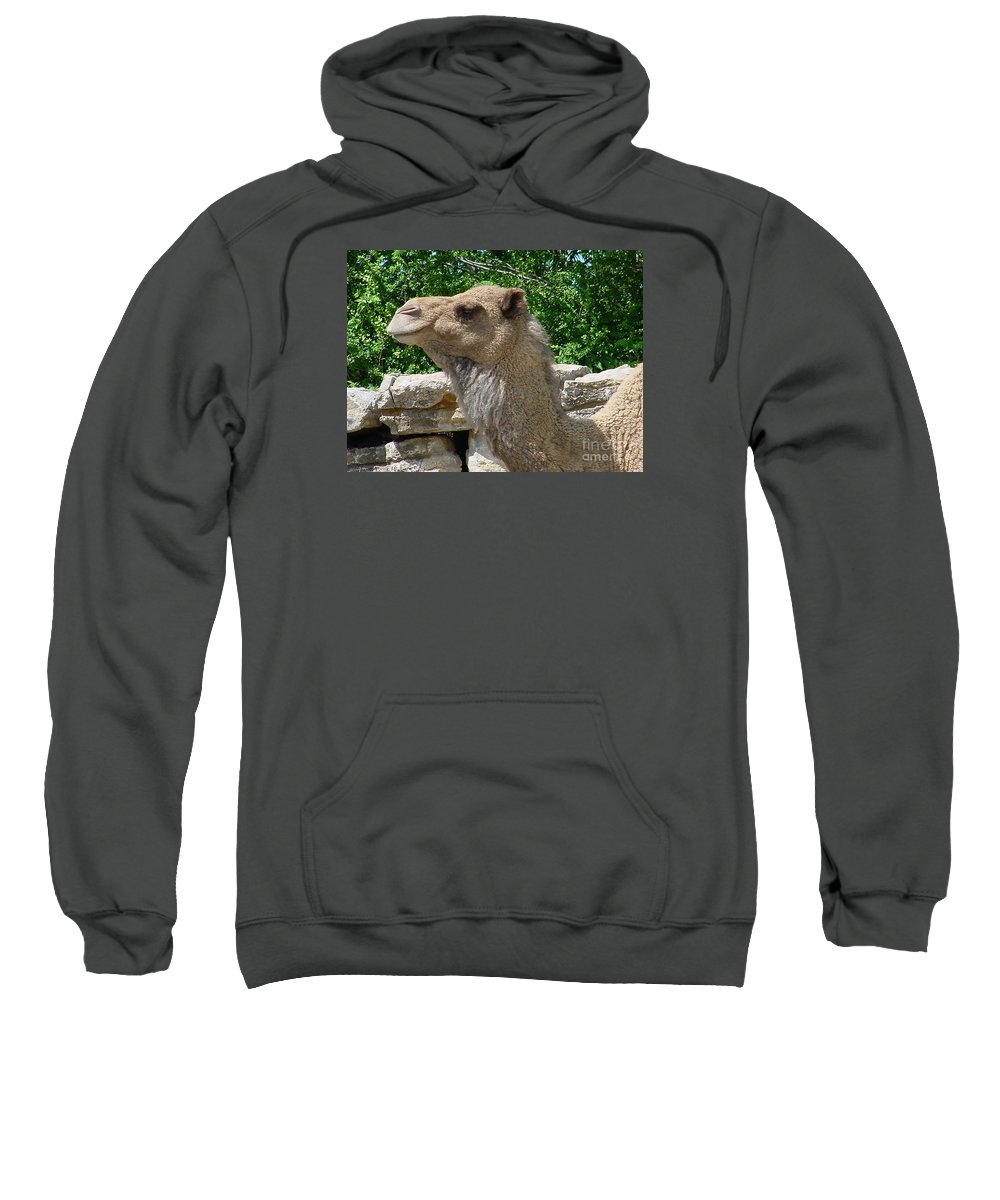 Camel Sweatshirt featuring the photograph Camel by Gary Gingrich Galleries