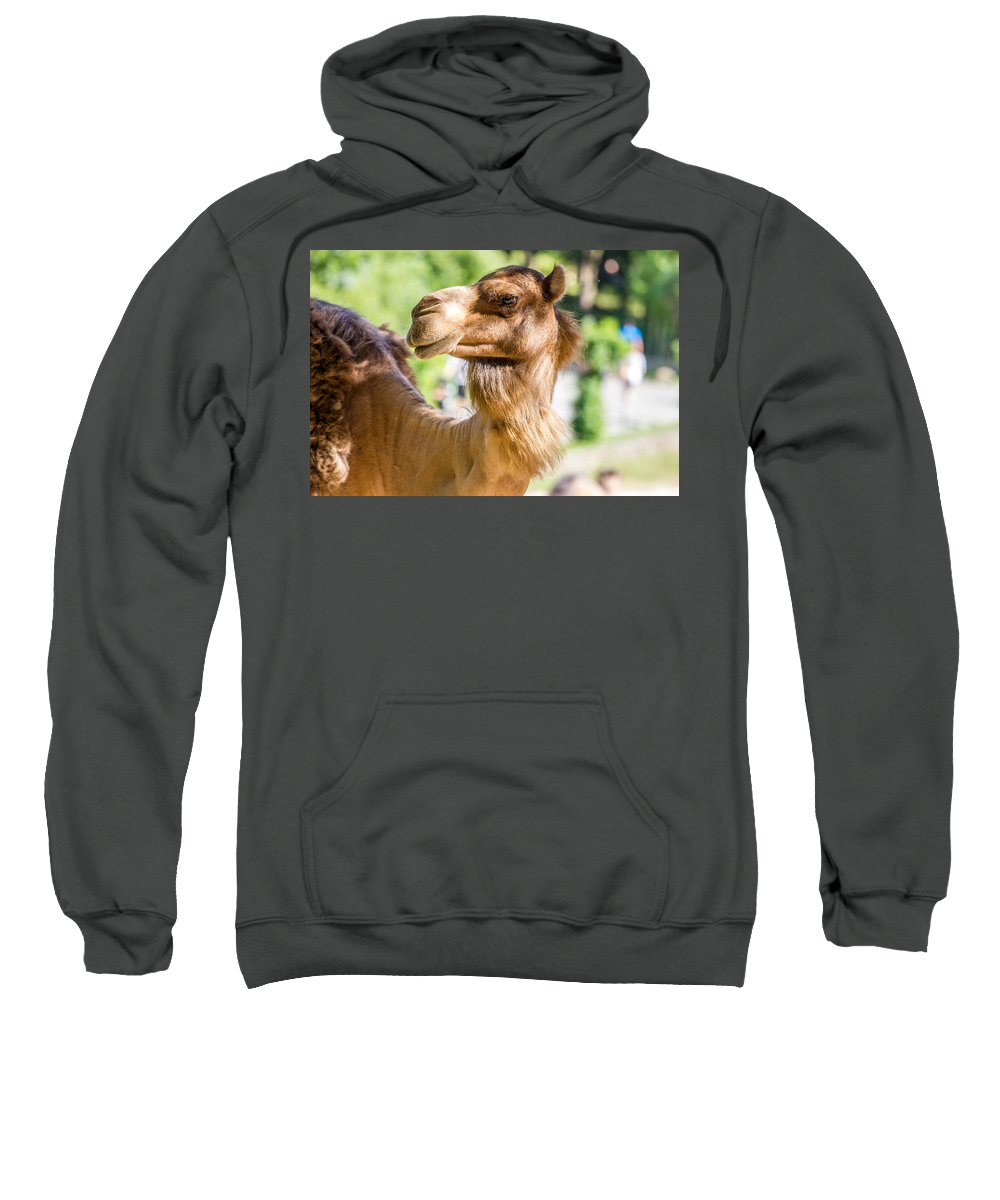 Animal Sweatshirt featuring the photograph Camel Portrait by Pati Photography