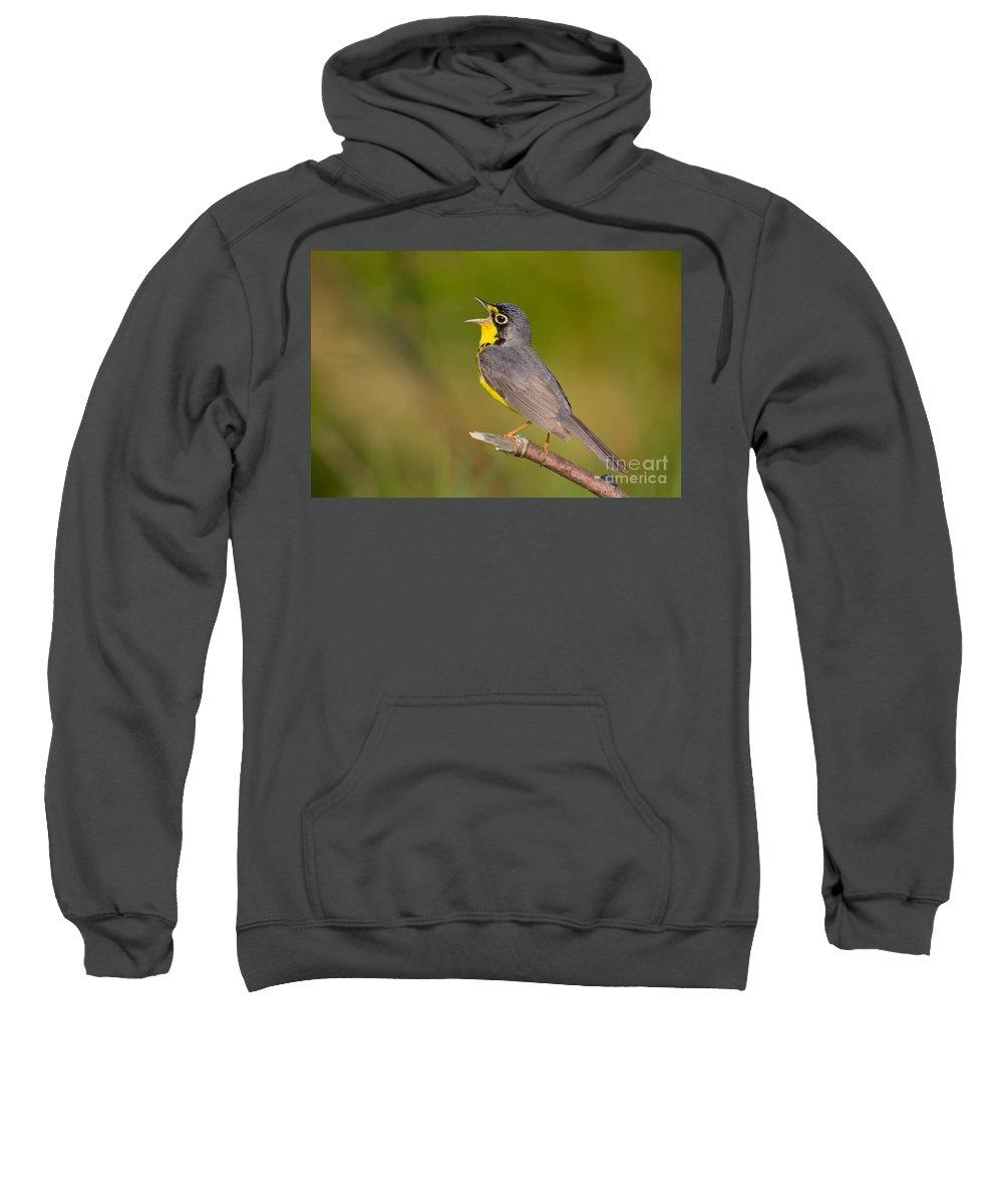 Fauna Sweatshirt featuring the photograph Canada Warbler by Jim Zipp