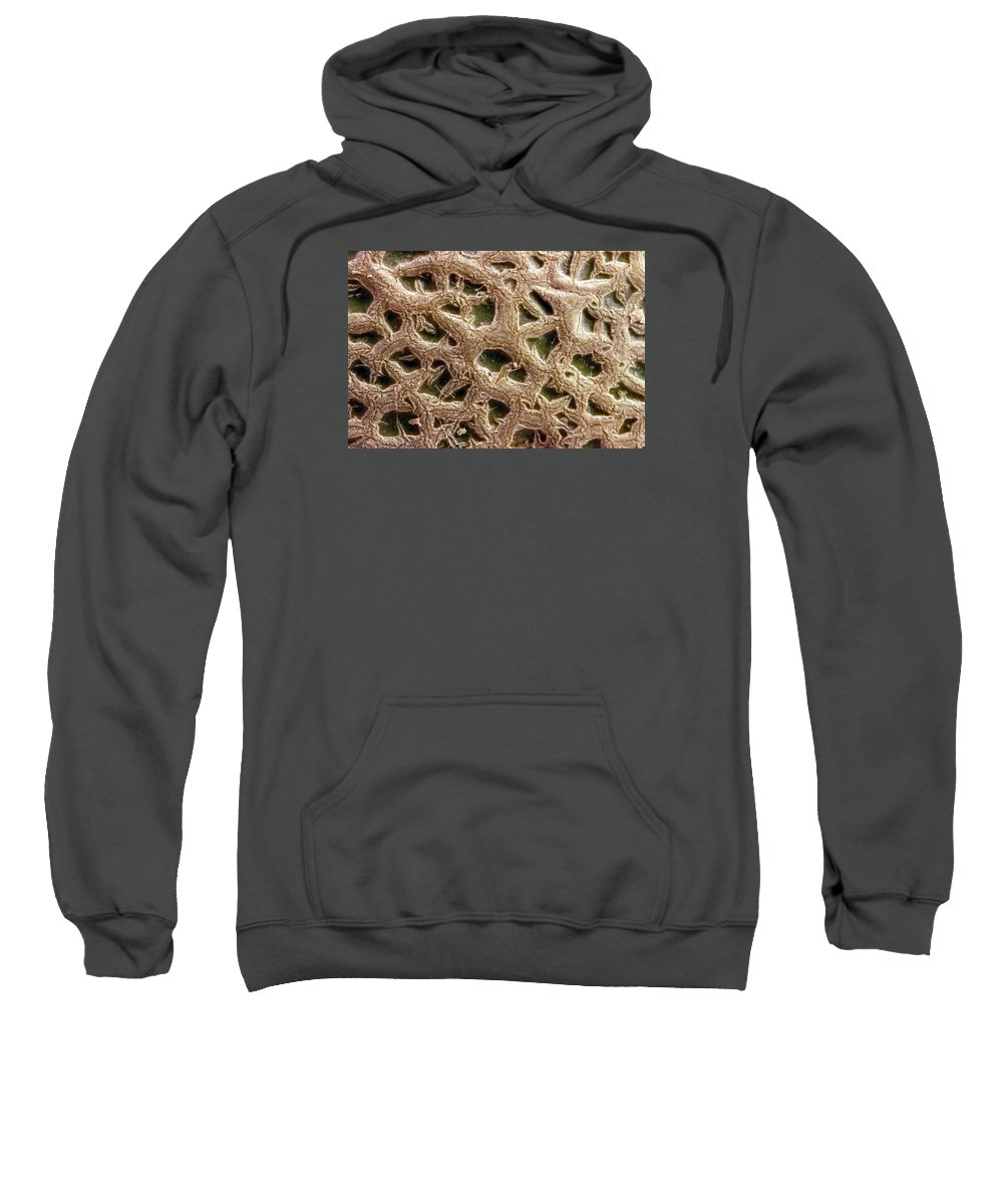 Canteloupe Sweatshirt featuring the photograph Canteloupe Macro by Sandra Foster