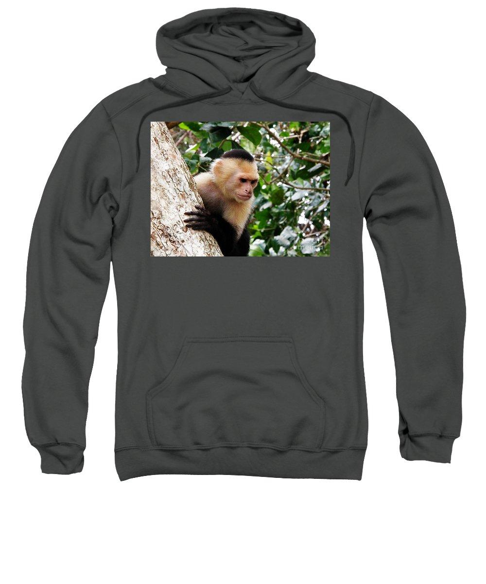 Capuchin Monkey Sweatshirt featuring the photograph Capuchin Monkey by DejaVu Designs
