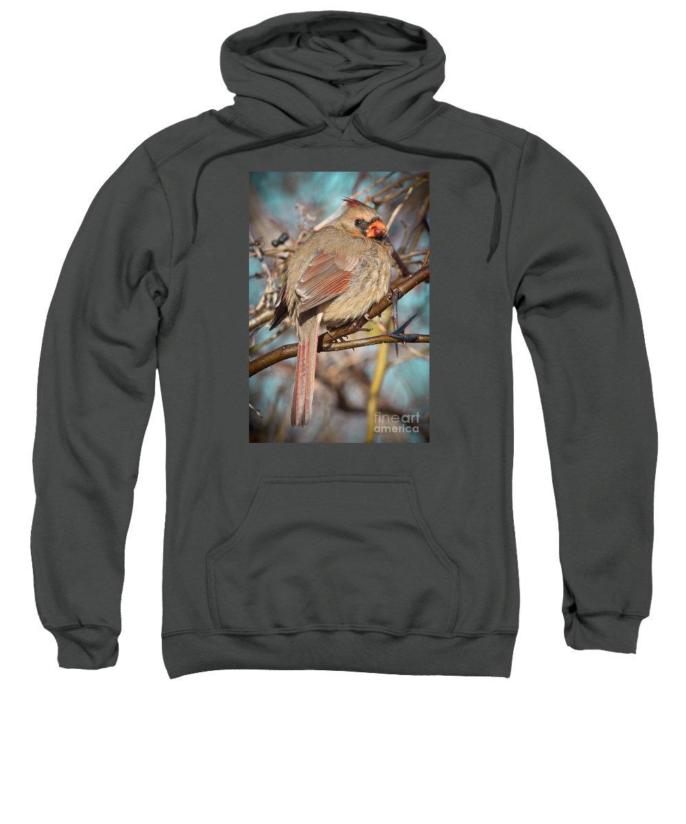 Wildlife Sweatshirt featuring the photograph Cardinal Female by Robert Frederick