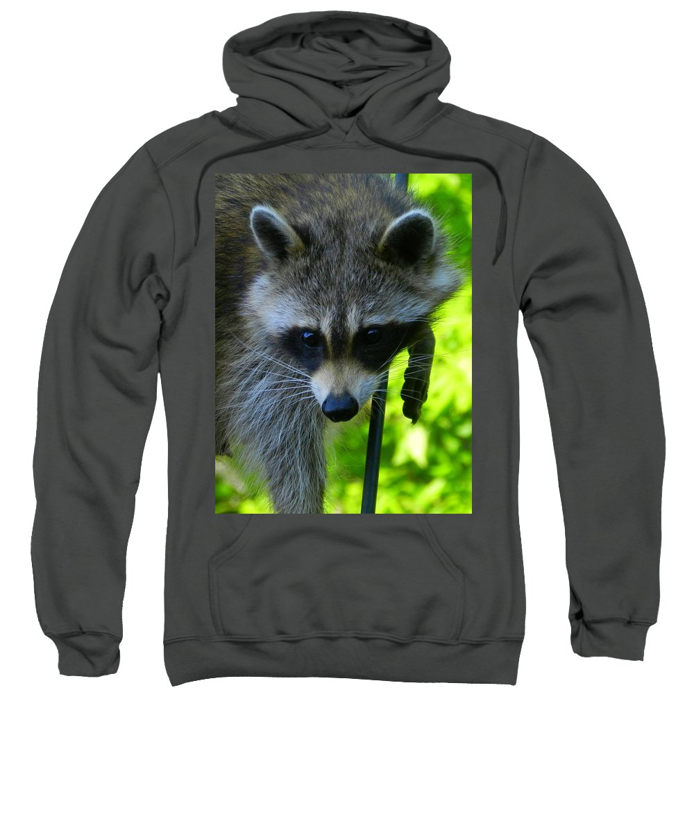 Raccoon Sweatshirt featuring the photograph Cautious Coon by Bruce Brandli