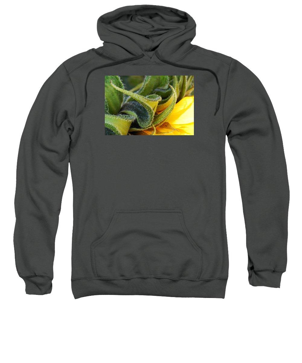 Sunflower Sweatshirt featuring the photograph Celebration Sunflower by Wendy Wilton