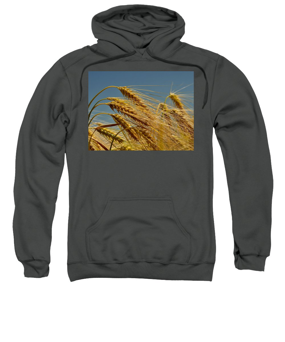 Wheat Sweatshirt featuring the photograph Cereals by TouTouke A Y