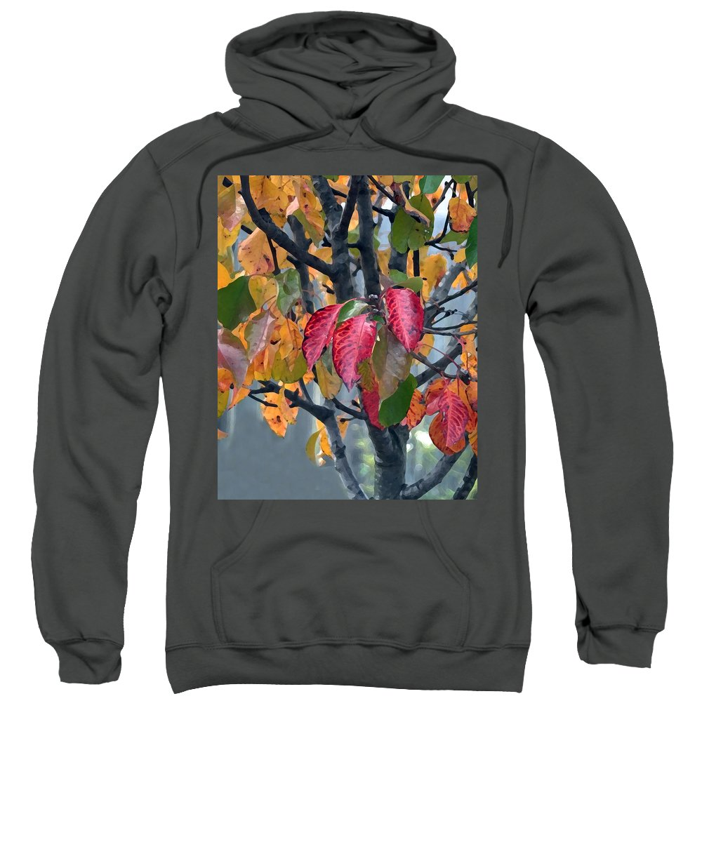 Tree Sweatshirt featuring the photograph Changing Colors by Jeanne A Martin