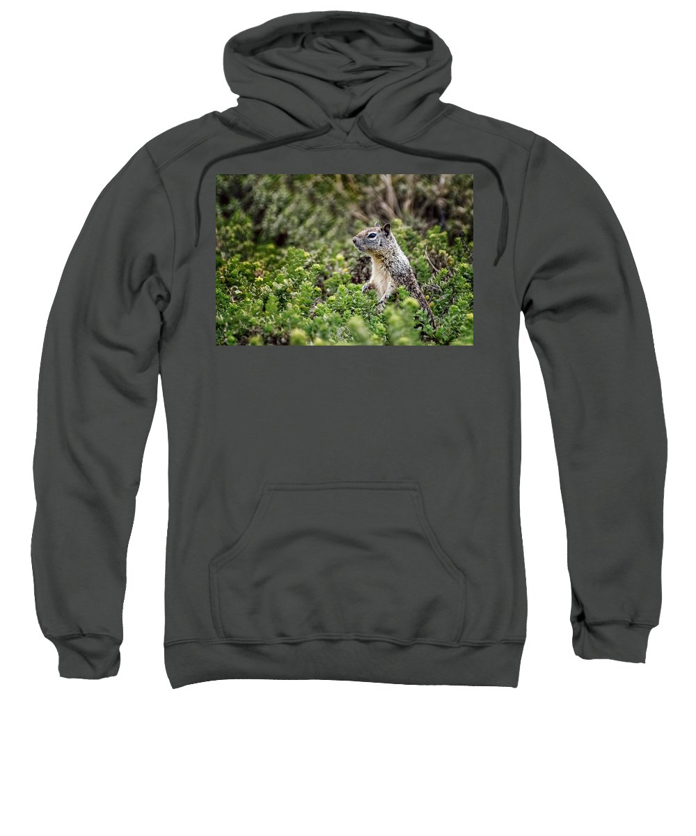 Squirrel Sweatshirt featuring the photograph Checking Things Out by Jon Berghoff