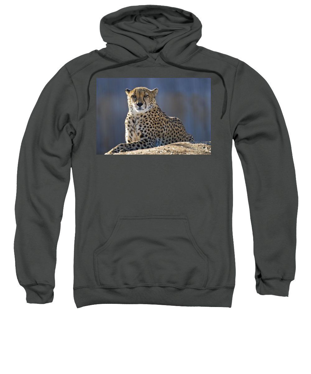Animal Sweatshirt featuring the photograph Cheetah by Juli Scalzi
