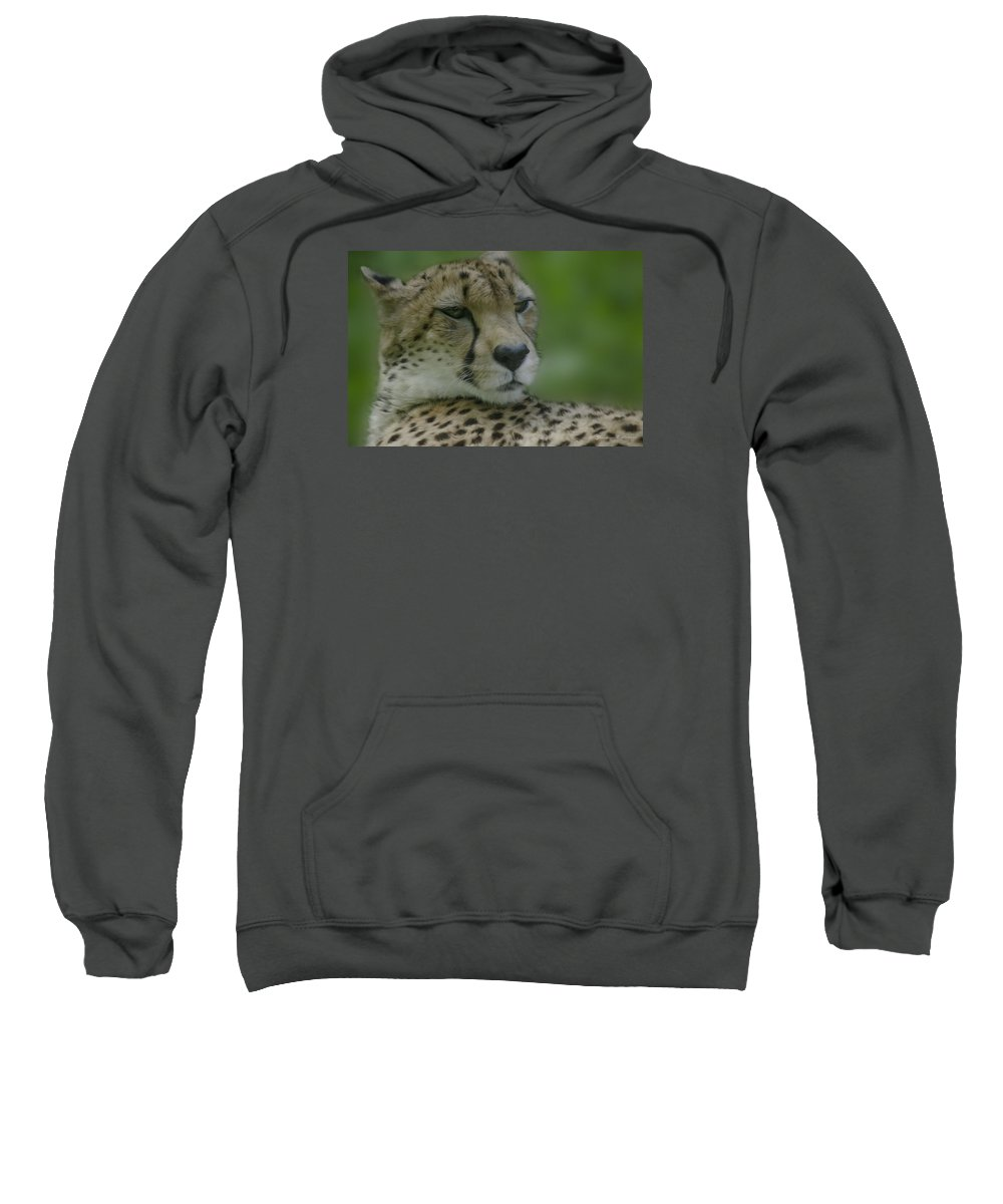 Cheetah Sweatshirt featuring the digital art Cheetah by Darlene Freas