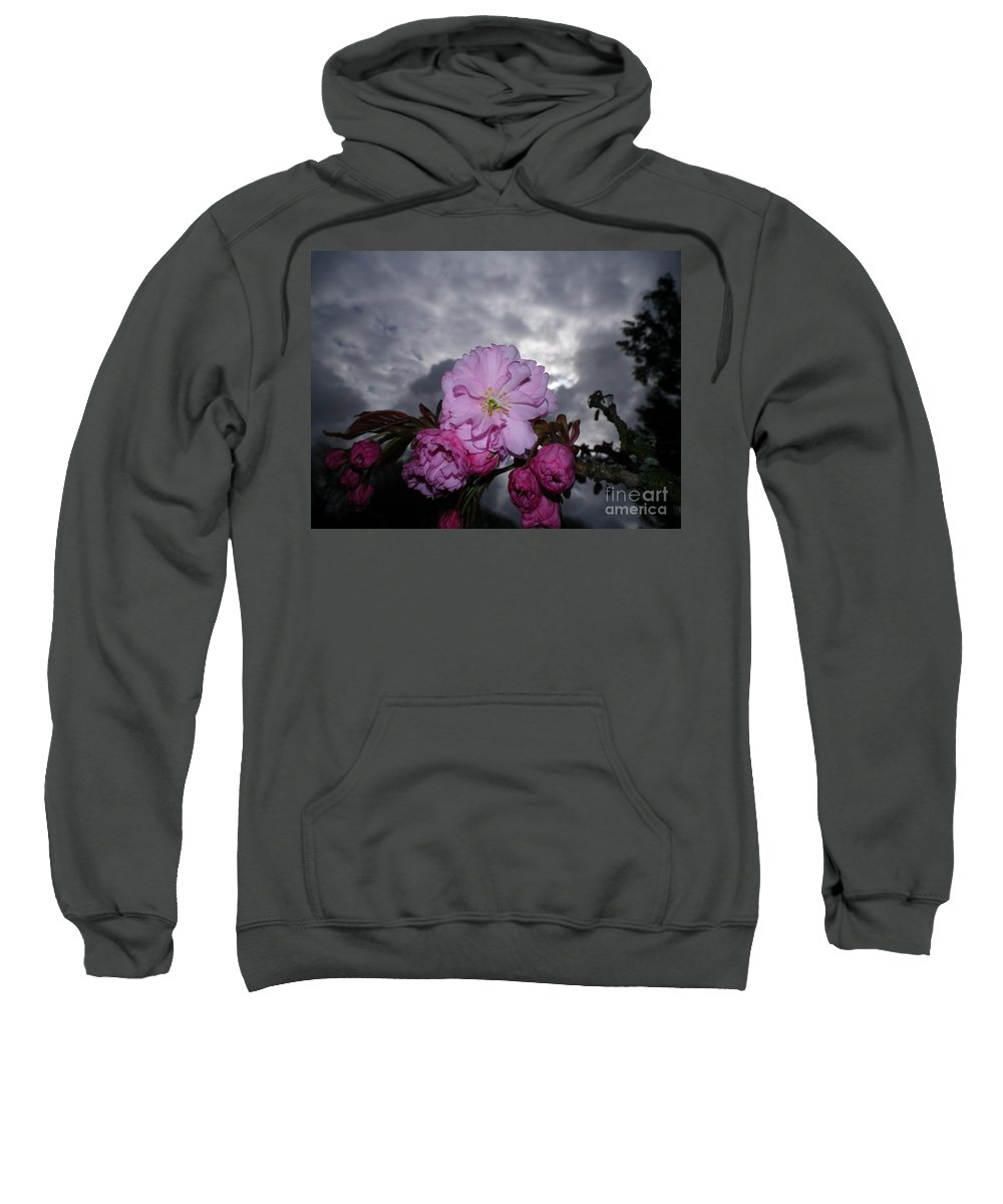 Cherry Blossom Tree Flash Macro Storm Stormy Grey Gray Clouds Dark Pink Spring Sky Skies Unusual Plant Plants Devon Serene Lowering Sweatshirt featuring the photograph Cherry Blossom by Richard Brookes