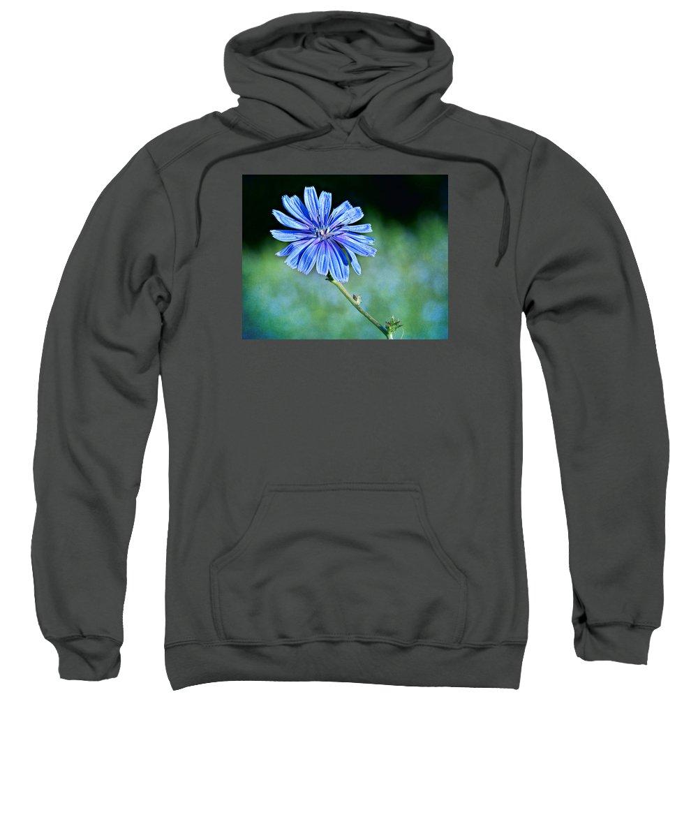 Chicory Sweatshirt featuring the photograph Chicory by Nikolyn McDonald