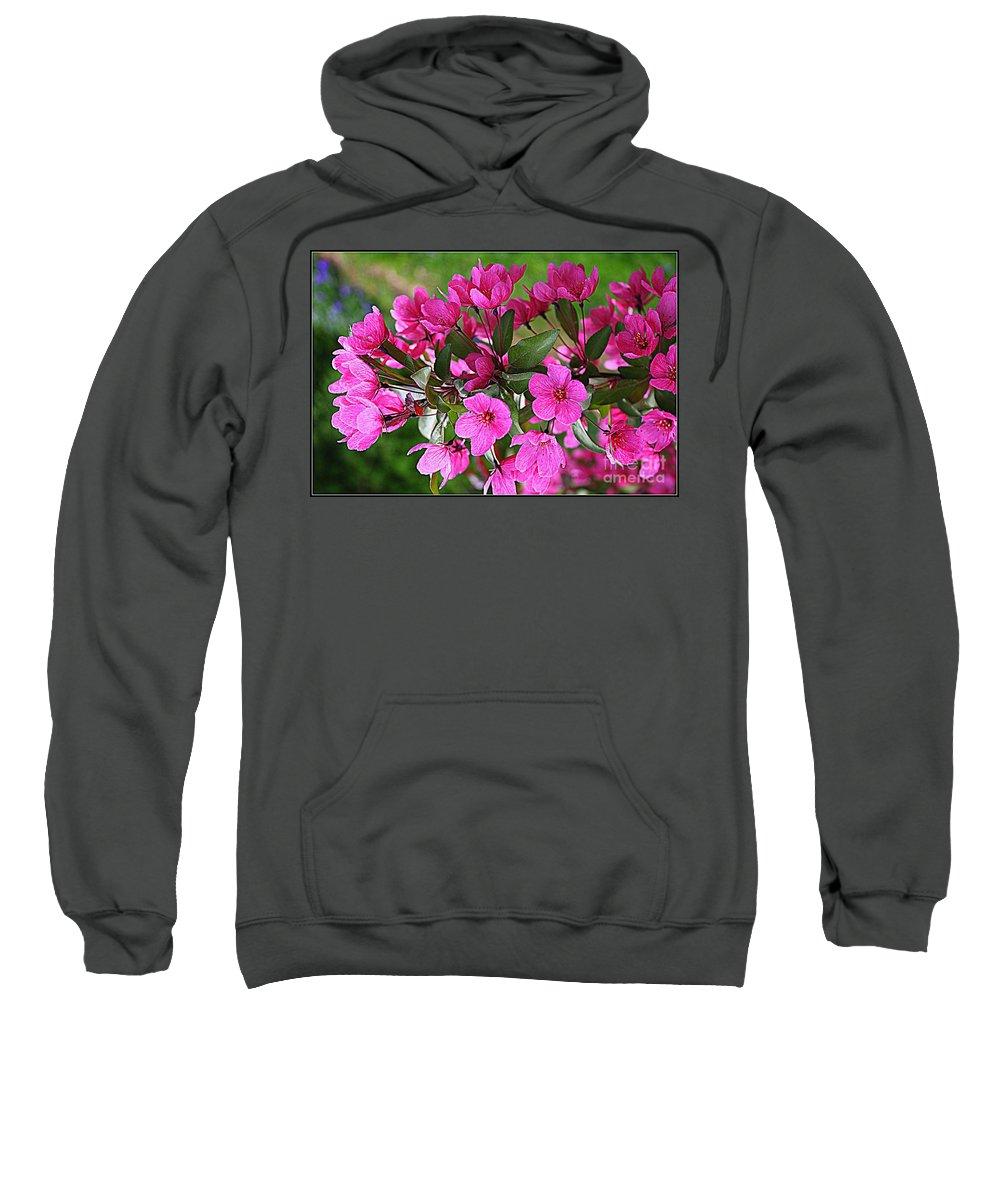 Chinese Apple Blossoms Sweatshirt featuring the photograph Chinese Apple Blossoms by Dora Sofia Caputo Photographic Design and Fine Art