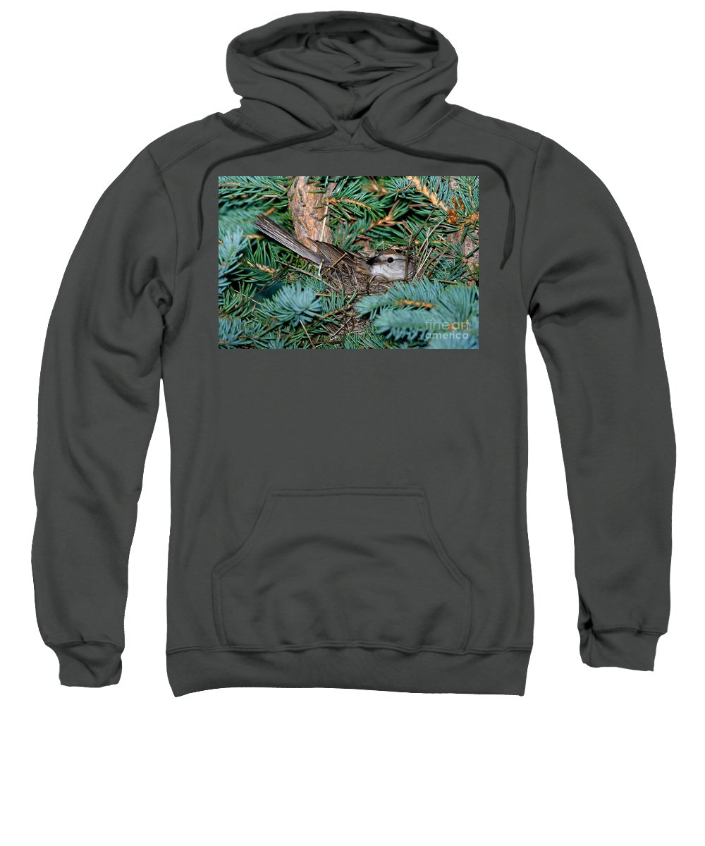 Fauna Sweatshirt featuring the photograph Chipping Sparrow On Nest by Anthony Mercieca