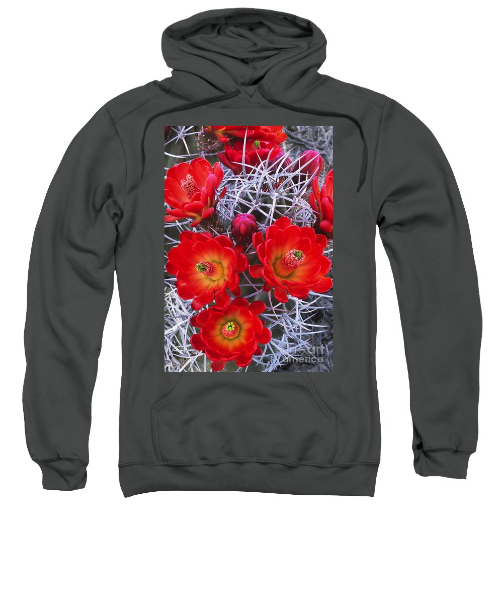 Claretcup Cactus Sweatshirt featuring the photograph Claretcup Cactus In Bloom Wildflowers by Dave Welling