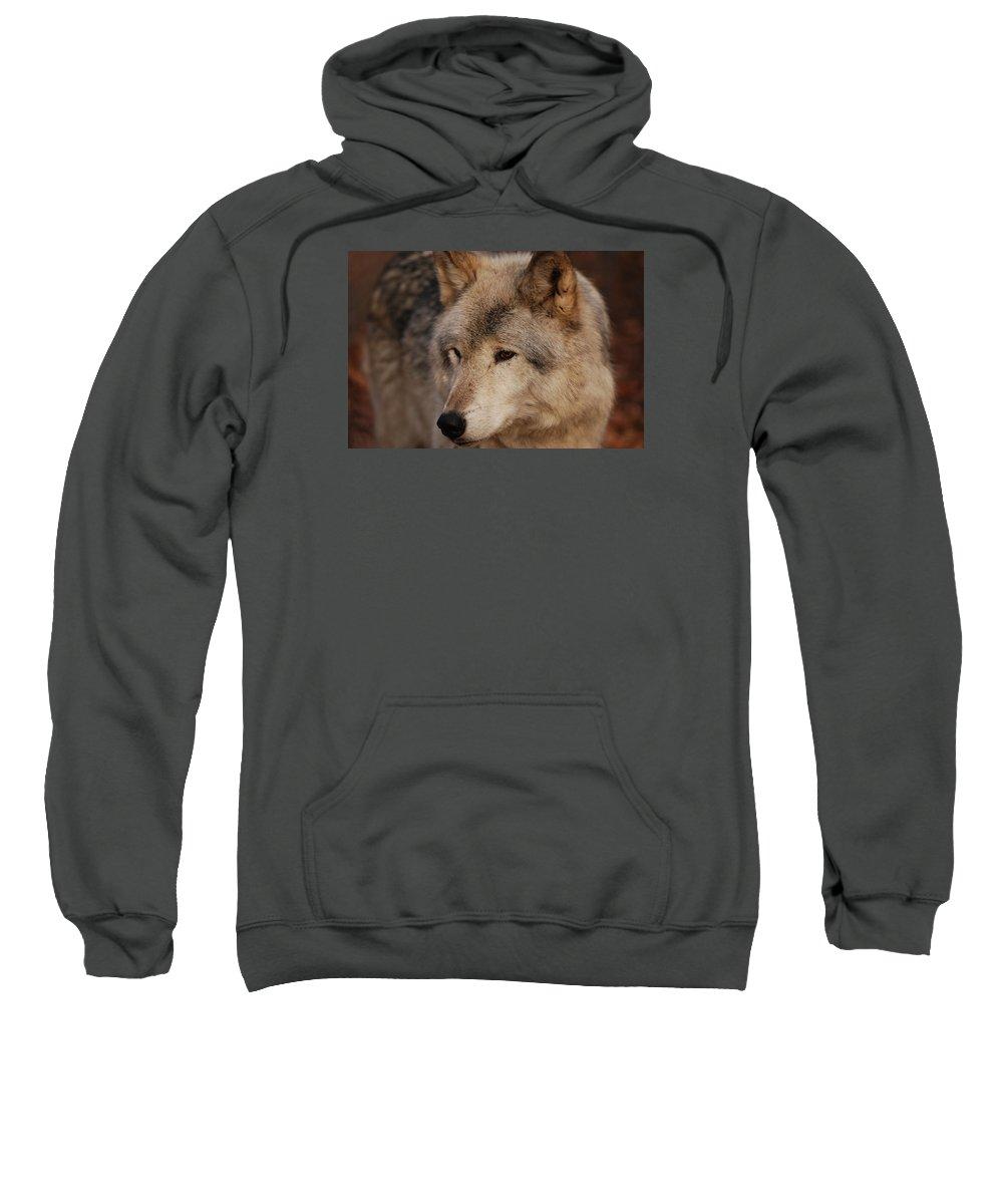 Wolf Sweatshirt featuring the photograph Close Up by Lori Tambakis